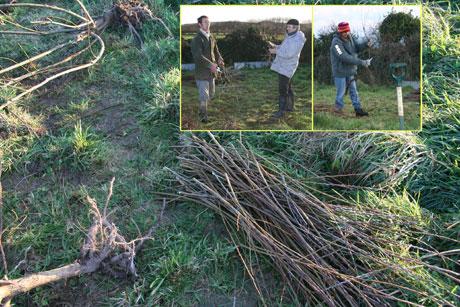 cut-willow